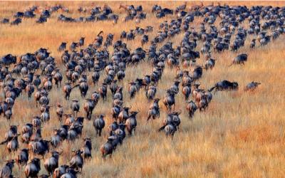 serengeti wildlife